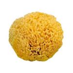 Natural Sponge 15 cm.